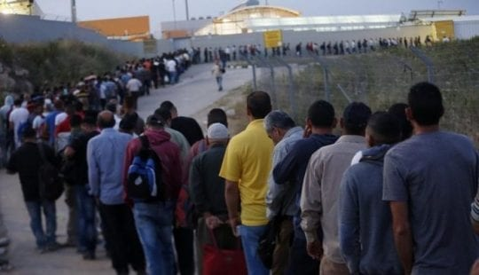 50 % من العمال الفلسطينين مصنفين عمالة غير منظمة