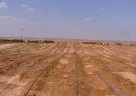 سلطة الأراضي المركز الفلسطيني لحقوق الإنسان