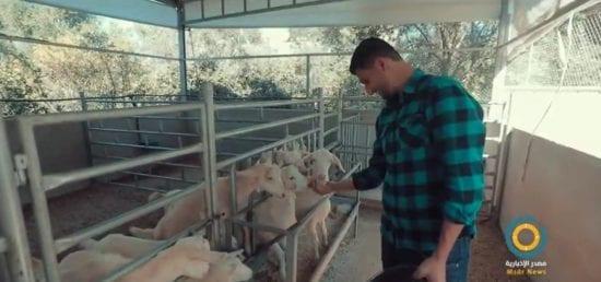 فيديو: شاب من غزة يقود مشروع ريادي لتربية سلالة خاصة بإنتاج الحليب