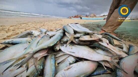 خلال المنخفض.. خسائر كبيرة للأراضي الزراعية وكميات وفيرة من الأسماك بغزة