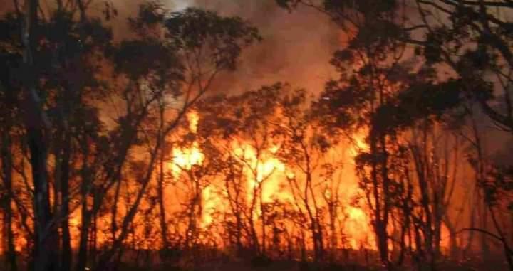 إعلام عبري: صور الأقمار الصناعية أظهرت أن حريق جبال القدس متعمد