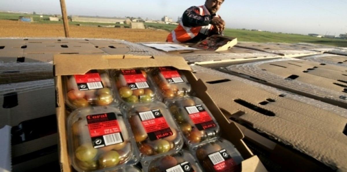 وزارة الزراعة لمصدر: 46 ألف طن إجمالي صادرات غزة الزراعية سنوياً