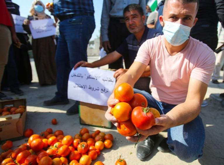 مزارعو غزة يحتجون على شروط الاحتلال لتصدير البندورة للضفة